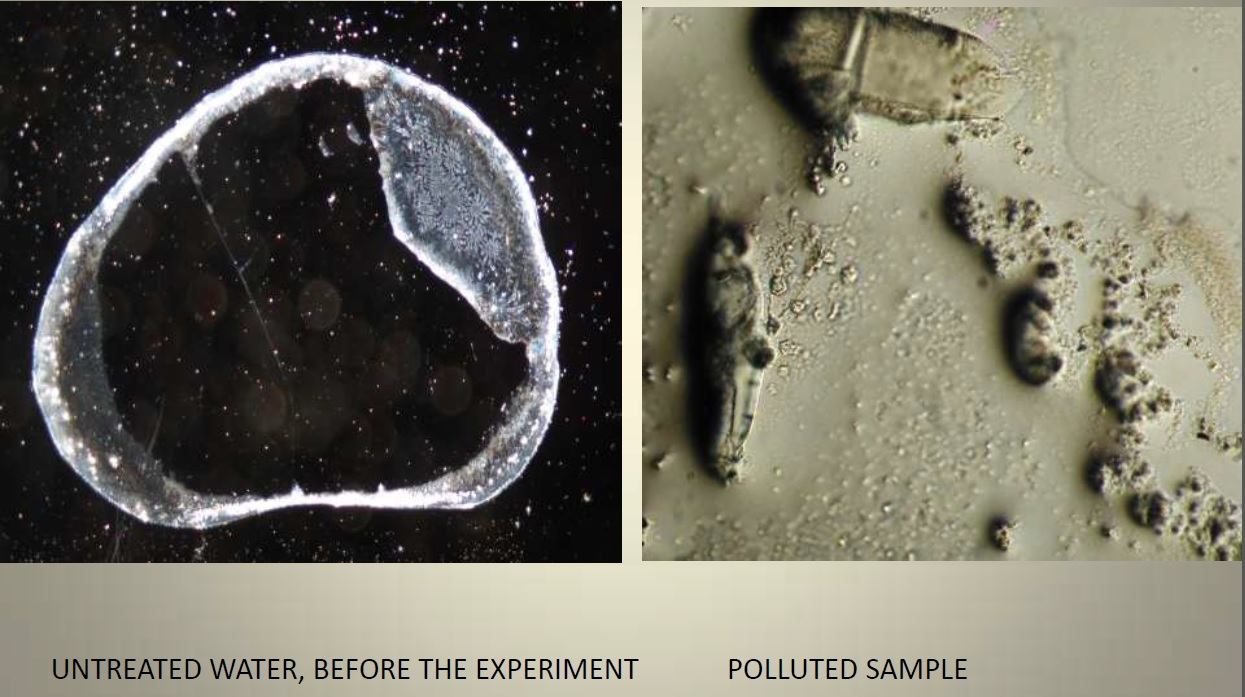 Untreated and Polluted Sample 1
